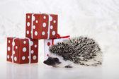 Hedgehog christmas — Stock Photo