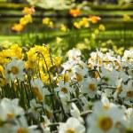 Garden — Stock Photo #7208031