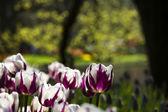 Spring in garden — Stock Photo