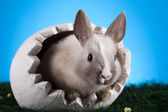 Easter, The bunny with a blue background — Stock Photo