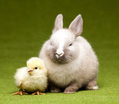 Bunny and chick, Easter frame — Stock Photo