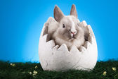 Little bunny, Easter — Stock Photo