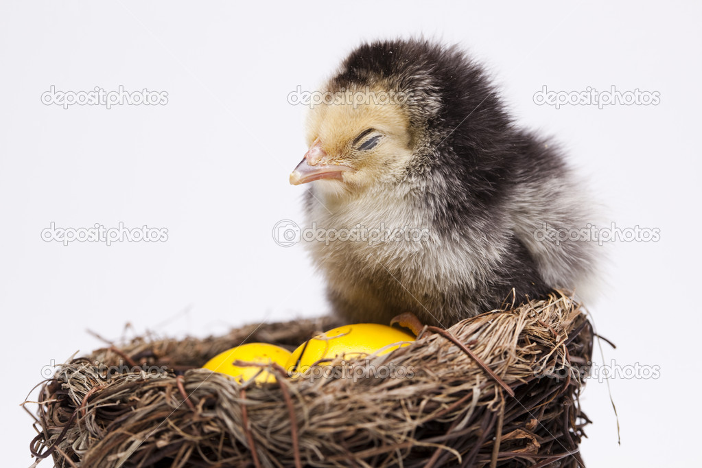 Happy easter. — Stock Photo #7210492
