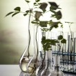 Plant growing in test tubes in a laboratory — Stock Photo #7220437