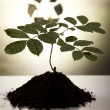 Plant and ecology, recycling — Stock Photo