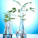 Plant laboratory — Stock Photo