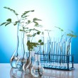 Chemistry equipment, plants laboratory glassware - Foto Stock