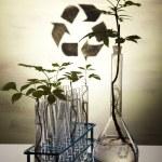 thumbnail of Chemistry equipment, plants laboratory glassware