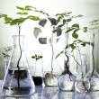 Stock Photo: Ecology laboratory experiment in plants