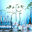 Stock Photo: Plants and laboratory