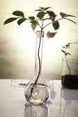 Ekoloji laboratuvarı deney bitkilerde. — Stok fotoğraf