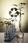 Chemistry equipment, plants laboratory glassware — Stock Photo