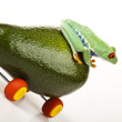 Driver frog — Stock Photo
