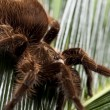 Scary Spider on Leaf — Stock Photo