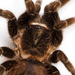 Spider close-up — Photo