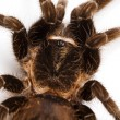 Spider close-up — Stock fotografie