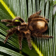 Scary Spider on Leaf — Stock Photo #7375181