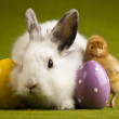 Happy Easter animal, Chick in bunny — Stock Photo