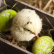 Easter young chick — Stock Photo #7376394