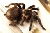 Plano de fundo aranha — Fotografia Stock