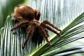 Scary Spider — Stock Photo