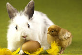 Happy Easter, Chicke in bunny — Stock Photo