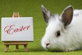 Easter Bunny — Stok fotoğraf