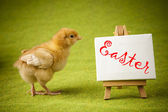 Chicks — Stock Photo