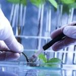 Plants and laboratory — Stock Photo