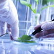 Ecology laboratory experiment in plants - Stock Photo
