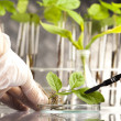 Floral science in laboratory — Stock Photo #7422529