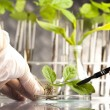 Stock Photo: Floral science in laboratory