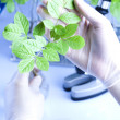 Floral science in laboratory — Stock Photo #7422784