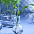 Chemical laboratory glassware equipment, ecology — Stock Photo #7423387