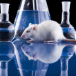 Stock Photo: Animal Laboratory