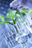 растения и лаборатория — Стоковое фото