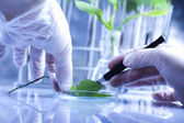 Ecology laboratory experiment in plants — Stock Photo