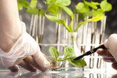 Ciencia floral en laboratorio — Foto de Stock