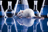 Animal Laboratory — Foto de Stock