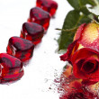 Rose with heart for love — Stock Photo