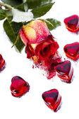 Love, Valentine day — Stock Photo