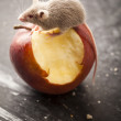 Red apple and mouse — Stock Photo