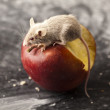 Stock Photo: Red apple and mouse