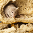 Stock Photo: Bread and mouse