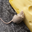 Cheese and mouse — Stock Photo