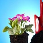 Garden concept, plant — Stock Photo #7451898
