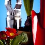 Garden concept, plant — Stock Photo #7451998