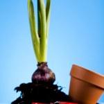 Garden concept, plant — Stock Photo #7452068