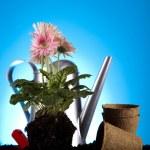 Garden concept, plant — Stock Photo #7452679