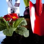 Garden concept, plant — Stock Photo #7452719